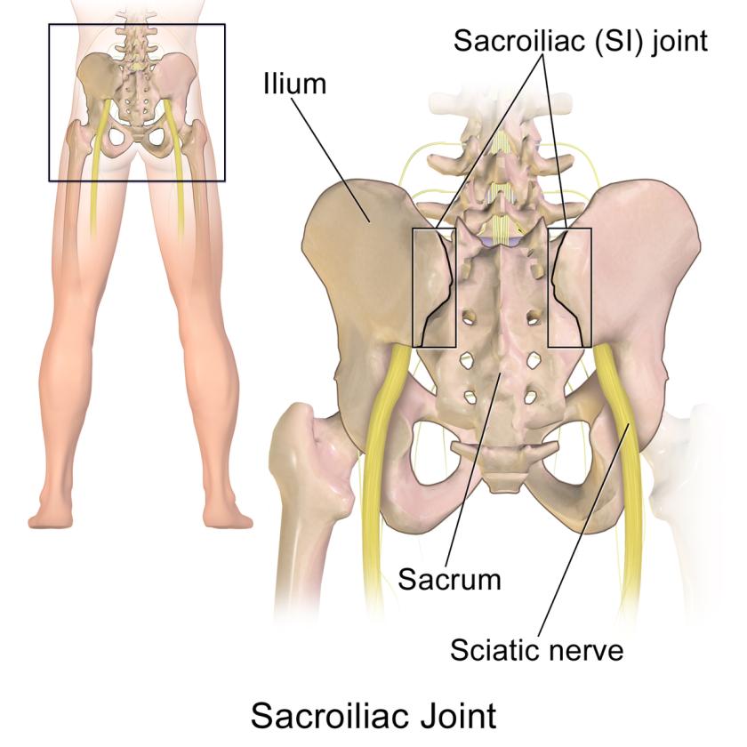 1200px-sacroiliac_joint